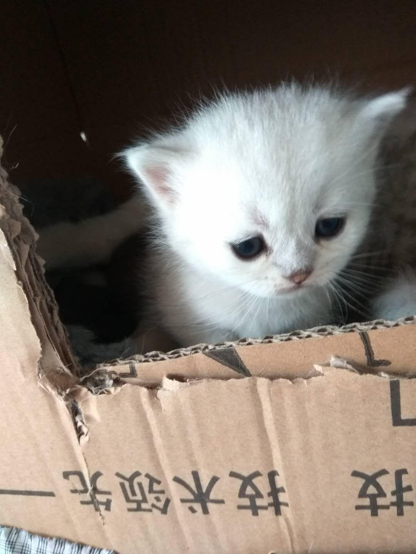 可爱小猫咪 - 淘宝集市 - 山水网-金坛区域首席网络